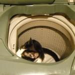 洗濯機の中1