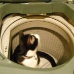 洗濯機の中2