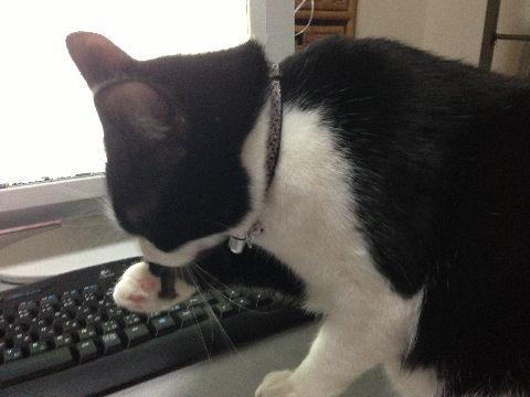 今日の猫缶『CIAO まぐろ&とりささみ おかか入り ほたて味』