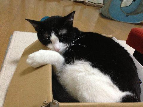 今日の猫缶『金のマルウオ まぐろ ささみ入り』