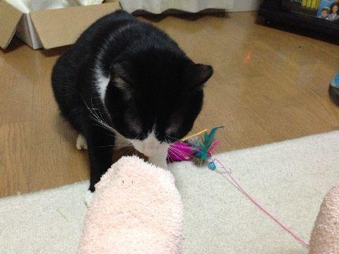足に襲い掛かる凶暴猫1