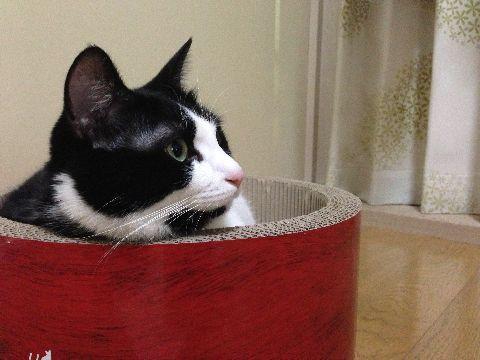 今日の猫缶『金缶ささみ かにかま入りささみ』