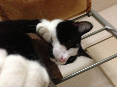 今日の猫缶『CIAO オホーツクほたて貝柱 甘えび入り』