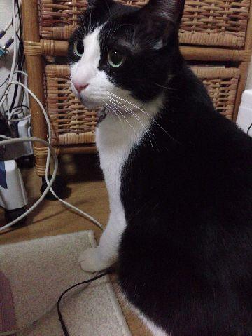 今日の猫缶『金缶ミニ あじ入りまぐろ』
