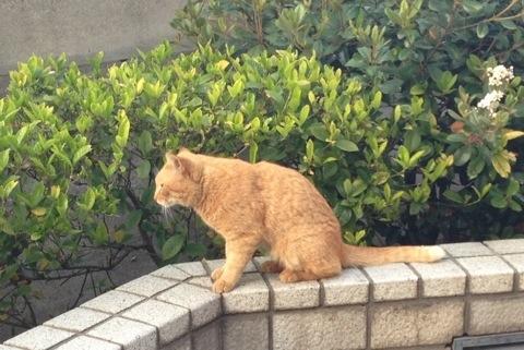 散歩中に見かけた猫1