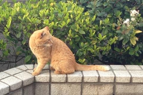 写真待ちしてくれる猫