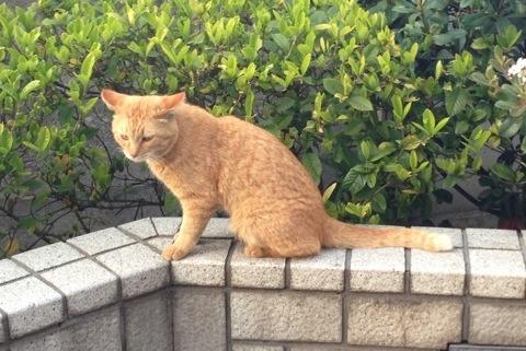 散歩中に見かけた猫3