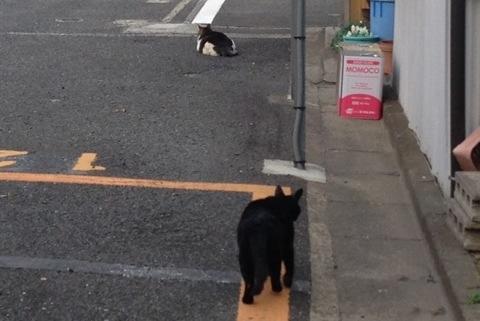 散歩中に見かけた猫5