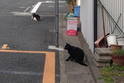 散歩中に見かけた猫6