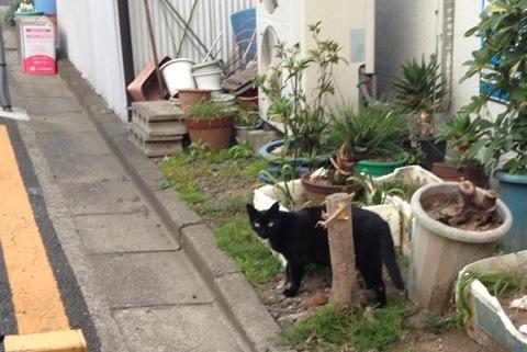 散歩中に見かけた猫4