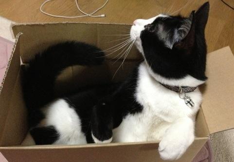 箱ぴっちり3