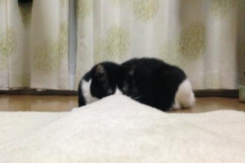 じゅうたんの様子を見る光圀3