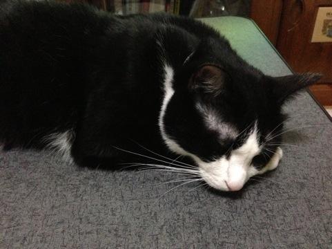 猫は夏でもコタツ好き2