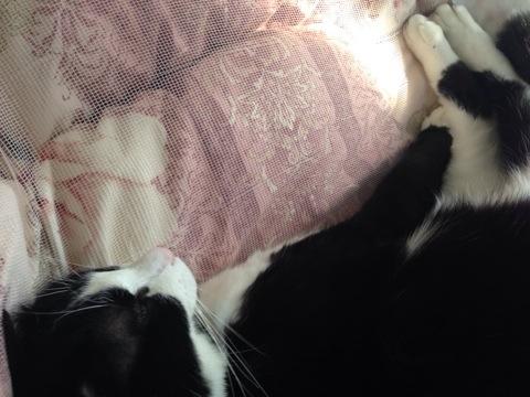 布団乗っ取り猫2