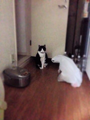 隣の黒猫くんに戸惑う光圀2