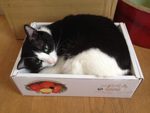 光圀とマンゴーの箱2