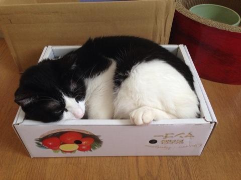 光圀とマンゴーの箱3