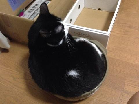 夏でも猫鍋4