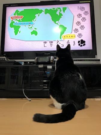 ネコ歩きを見る猫 2020 その2