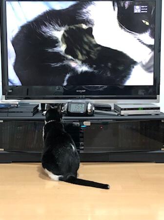 ネコ歩きを見る猫 2020 その4